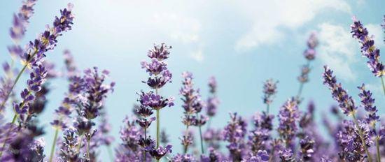 MSC Noticias - CO_Co_Lavender Agencias Com y Pub Blue Marketing Estética y Belleza Publicidad