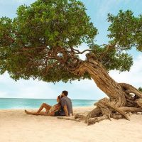 MSC Noticias Latinoamerica - Couple-sitting-next-to-a-divi-divi-tree-200x200 Jam - SoloCaribe Com Viajes